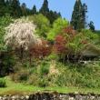 和牛のふるさと・おじろの春