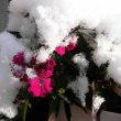 雪の下には、ちょっぴり≪春≫が……