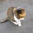 空き家の猫3