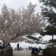 2018桜④