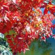 2018散歩㉞…西渓公園の紅葉など…