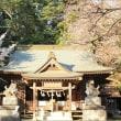 櫻川磯部稲村神社(桜川市)の糸桜