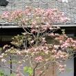 花水木のころ