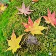 紅葉もそろそろ終わり その2(赤塚植物園)