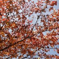 桜の木ですよっ!おいおい!
