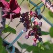 ●小松市 中海町 ロードパーク「なかうみの里」 満開の 芝桜と白山 アオサギ チューリップ ハナミズキ