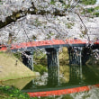 杉の大橋(さくらまつり30)