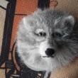 羊毛フェルト~オオカミに魂が入り始めたようです~