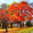 北海道大学の紅葉 ♪