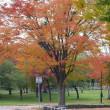 農試公園の紅葉 桜の赤が綺麗