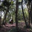 おゆみ野の森で待ってるよ!~焚火が恋しい季節です~