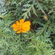 庭掃除と街の花