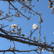 春は一進一退