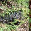 安藤広重「信濃 更科 田毎月 鏡台山」でキノコ狩り。クリタケとナメコを300本ぐらい採取。妻女山の秋模様(妻女山里山通信)