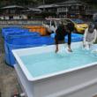 <西日本豪雨>孤立集落に漁船で水オカザキさんに住民感謝