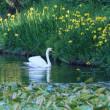 ●奥卯辰山健民公園 新公園センター 満開の八重桜 紅白のハナミズキ 八重の水仙 眺望 街並み