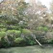 花・花・花 門司白野江植物公園