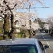 ぶらりミニトリップ 夙川の桜と篠山の桜と温泉と 移住地探し
