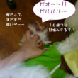 2017 9/23★今日はたろう君・はる君・ラックル君・あずきちゃん・ももちゃん・りりーちゃん★