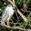 栗林公園探鳥会