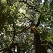 上野の森 樹木調査4回目