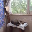 猫ブログ・・3匹の写真〜