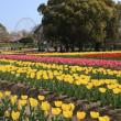 春の万博記念公園2018