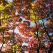 秋の水辺。