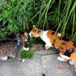 うちの先住猫リサ&チエ&雀のチュンの思い出写真にゃりぃ~♪