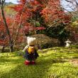 一度は見たい 「白龍園」の紅葉。今年も艶やかな美しさ。