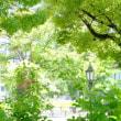 中之島公園寸景 (1)