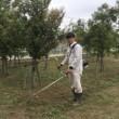 埼玉キッコーマン  植栽管理作業