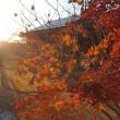 最後の紅葉が夕日に映えて