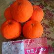 今年もオレンジを美味しく!