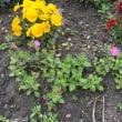 楽農クラブの掲示板、4月の花壇