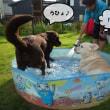 2色の水遊び