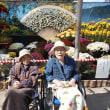 紅葉狩り 臥竜公園菊花展