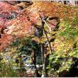覚園寺の散紅葉③