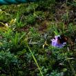 立花兄が選んだ池の平周回コースで花を愛でる