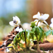 職人が咲かせた、箱根にない花たちと噴煙。