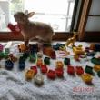 ブロックのおもちゃで遊ぶもこちゃん