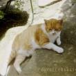 半日陰の猫*ツブコ大佐