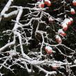 ビオトープに・・・雪が降る・・・!!