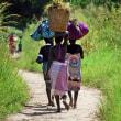 ザンベジアは収穫期。
