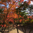 松原下屋敷の紅葉