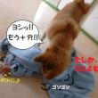 2017 9/19★今日はたろう君のみ★