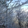 高城山霧氷