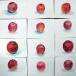透明水彩でリンゴを描く