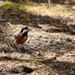 網走神社の鳥見