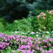 馬見丘公園の花  8月 8日